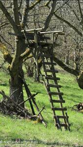 Heimtücke im Wald (Mensch, Tiere, Natur) Gedichte - Gedanken