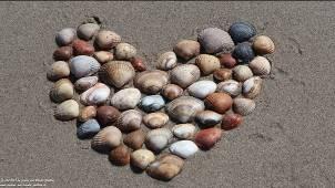 Horizont - (Gesellschaft, Mensch, Natur) Gedichte - Gedanken