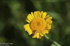 Gelber Button  (Mensch, Gesellschaft, Politik) - Gedicht - Gedanken  - Aphorismen