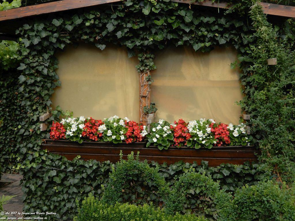 Begonien am Gartenhäuschen