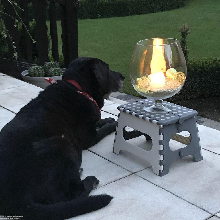 Hund Xenia