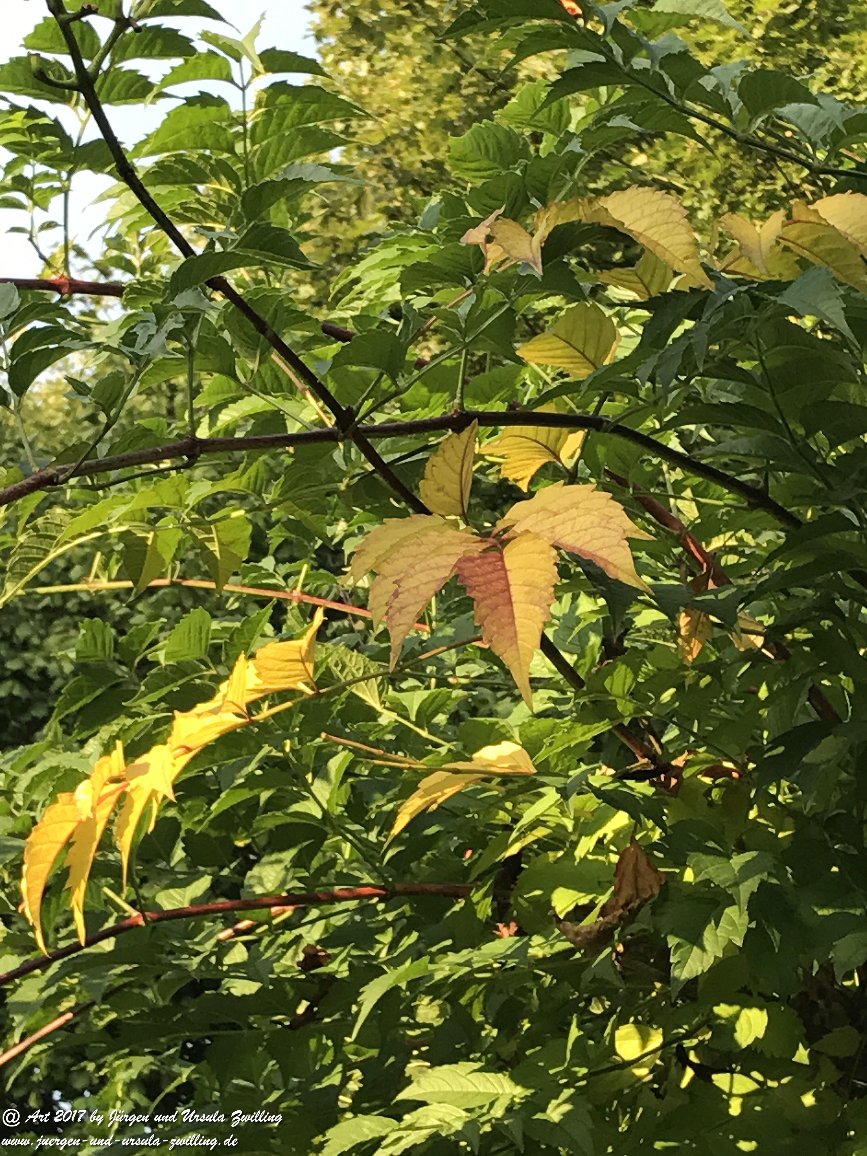 Herbst - Bote im Garten