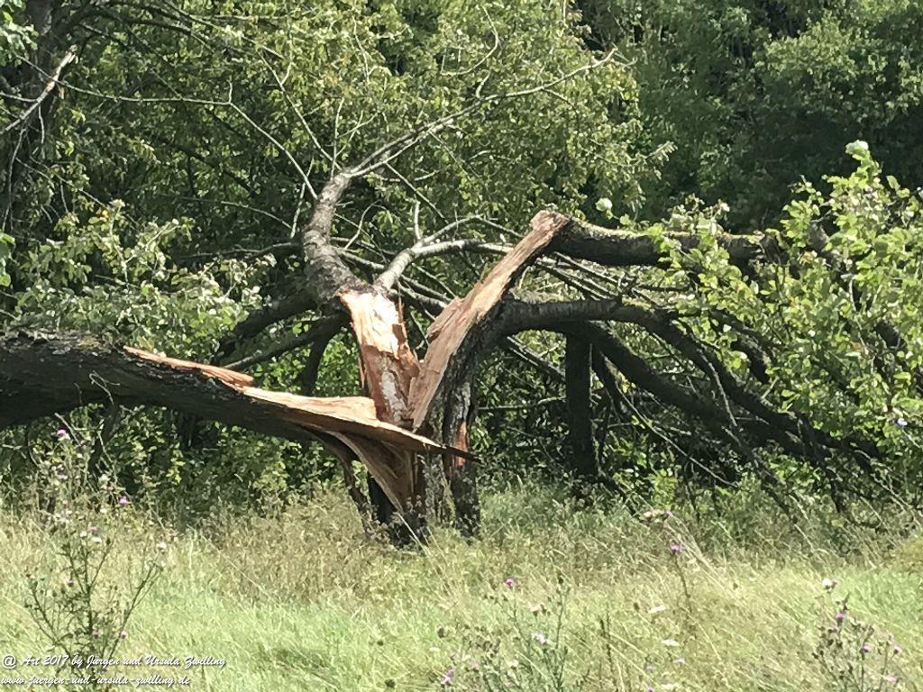 Naturkunst - Ober Olmer Wald - Rheinhessen