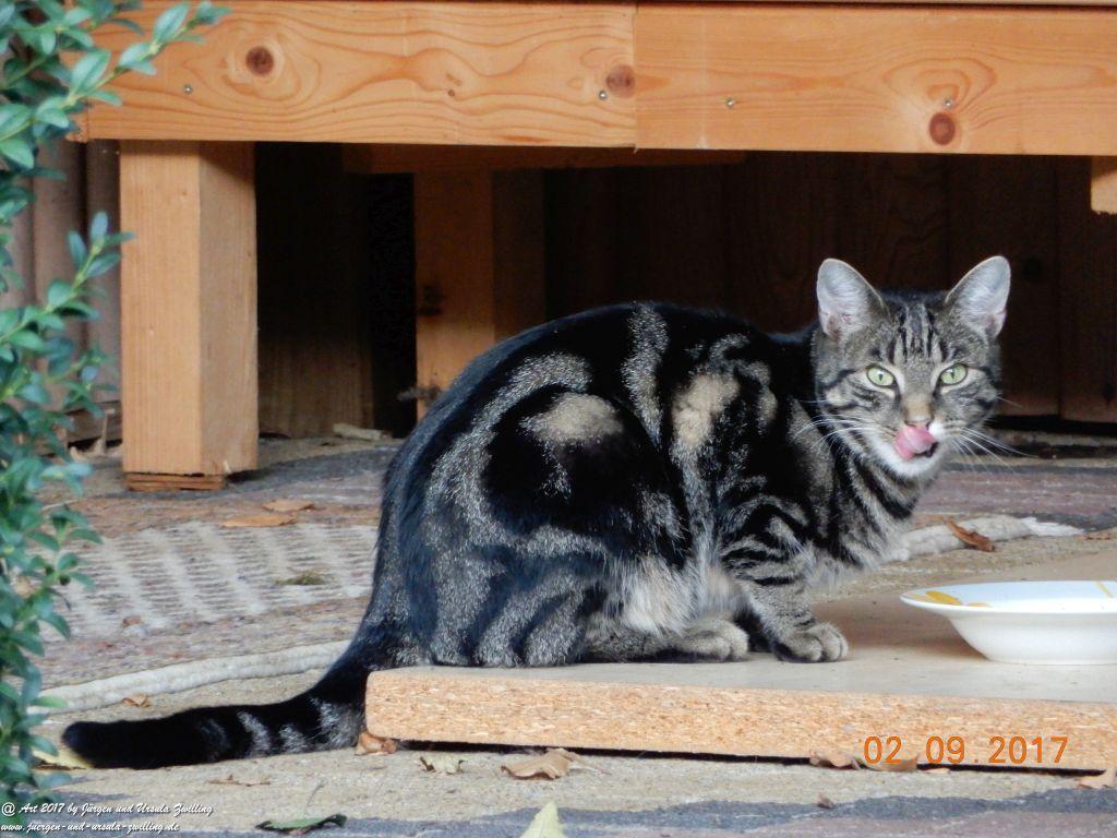 Katze Mimi September 2017