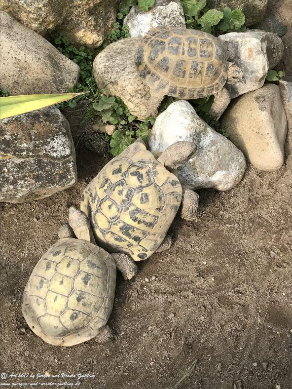 Schildkröten - letzte Sonnenstrahlen vor dem Winterquartier