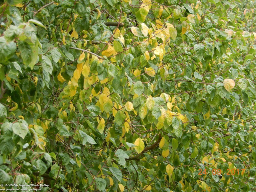 Herbst in der Feldern von Mainz Finthen - Ober Olmer Wald - Rheinhessen