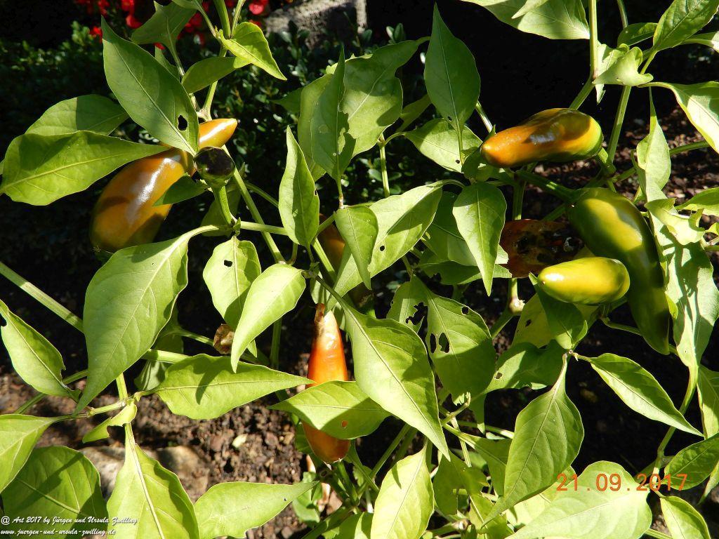 Chilli und Paprika