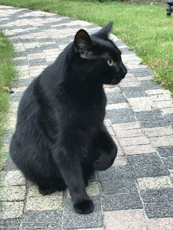 Katze Mimi Oktober 2017