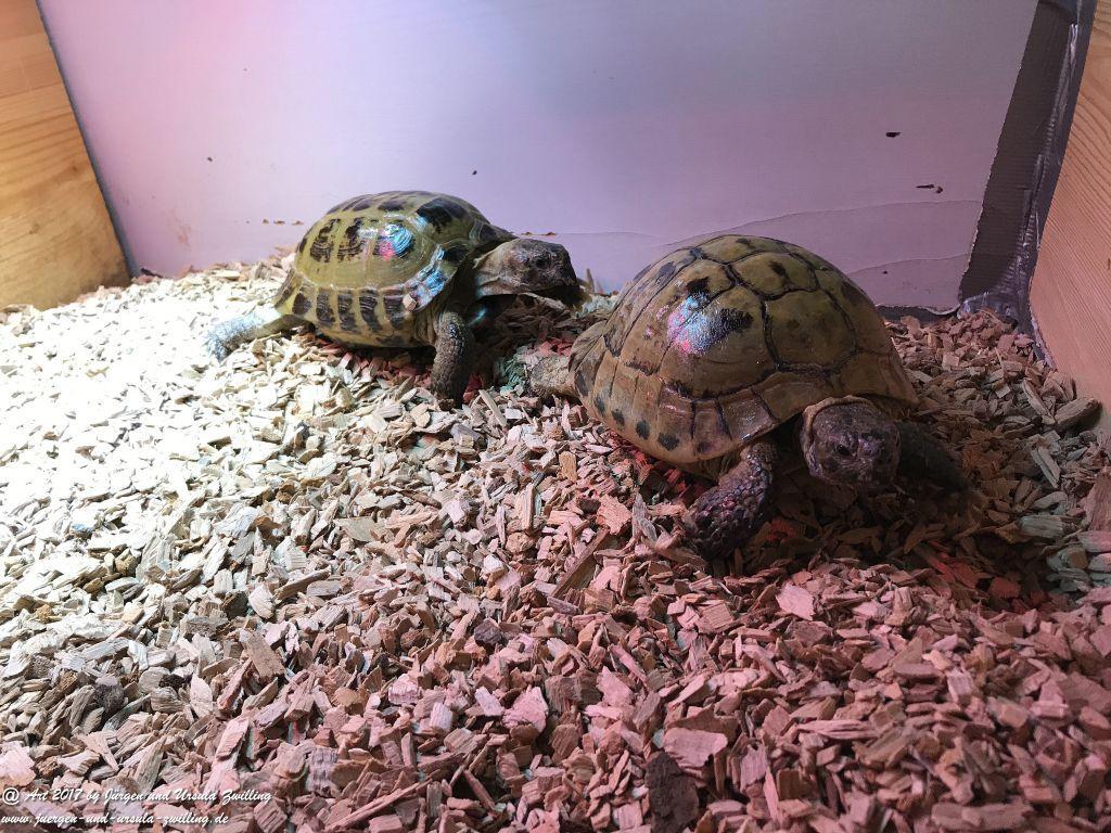 Schildkröten Umzug ins Winter-Quartier
