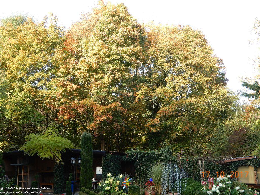 Oktober Morgen im Garten