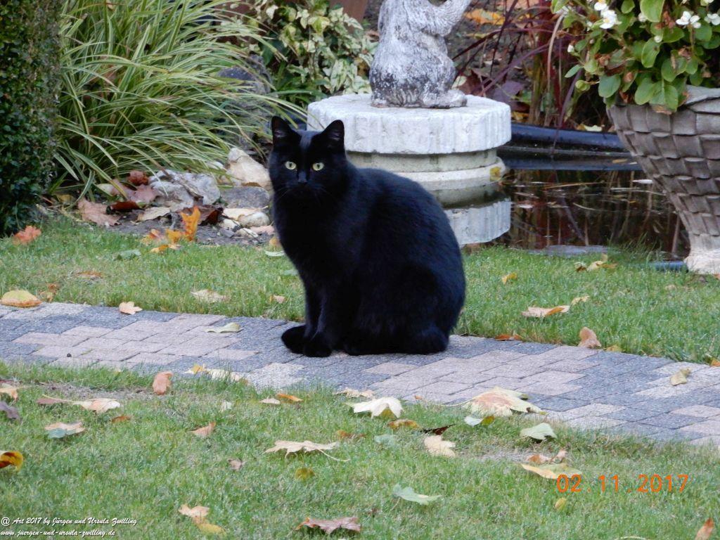 Katze Mimi im November 2017