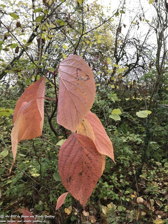 Natur - Blatt - Kunst - Ober Olmer Wald - Rheinhessen - Mainz