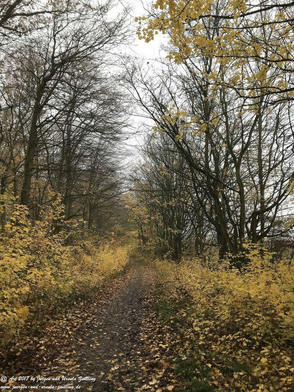 November im Ober Olmer Wald - Rheinhessen