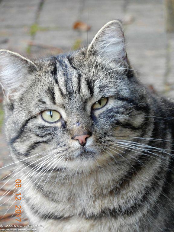 Katze Mimi im Dezember 2017