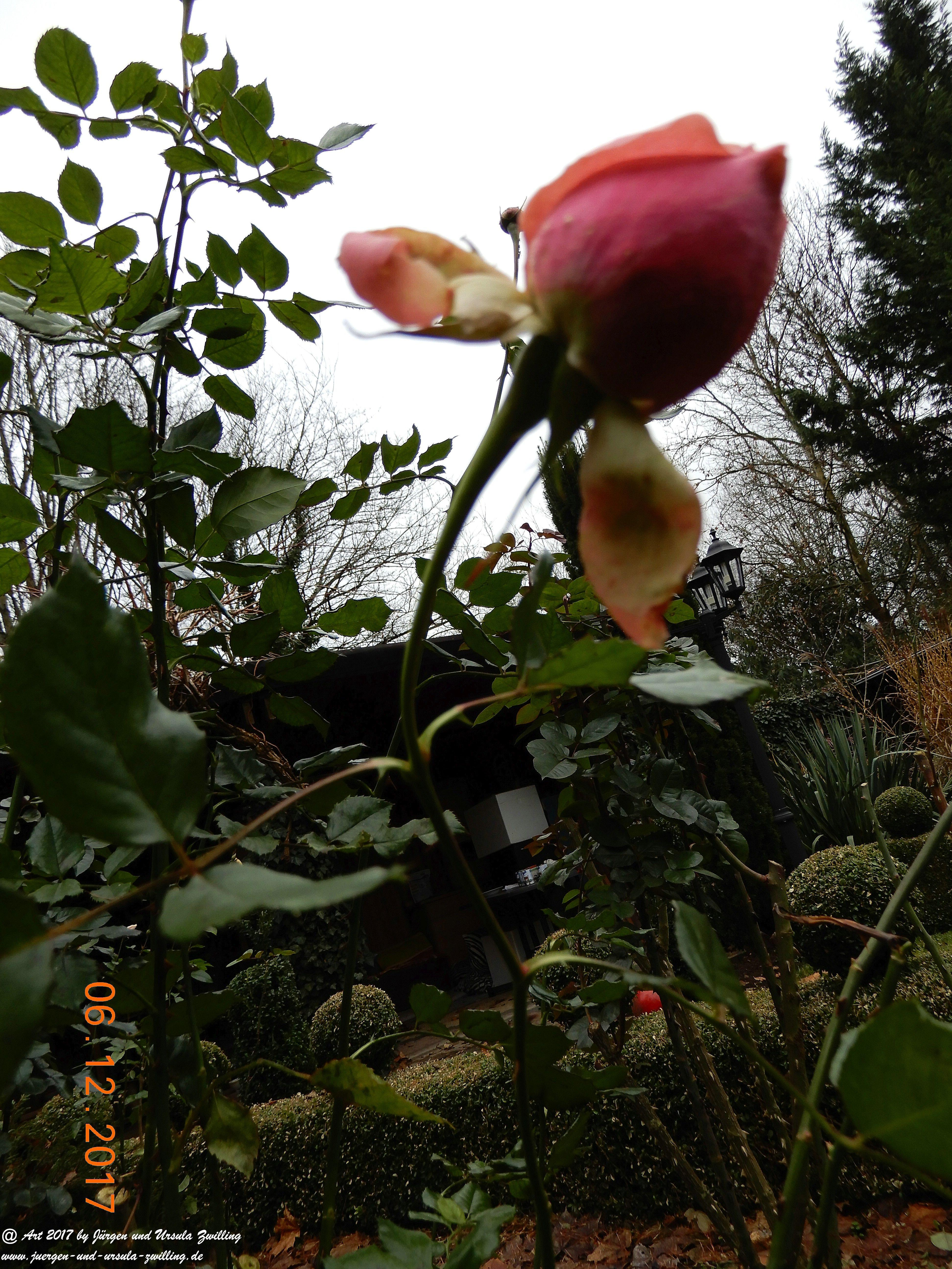 Blüte im Dezember