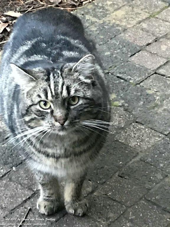 Katze Mimi