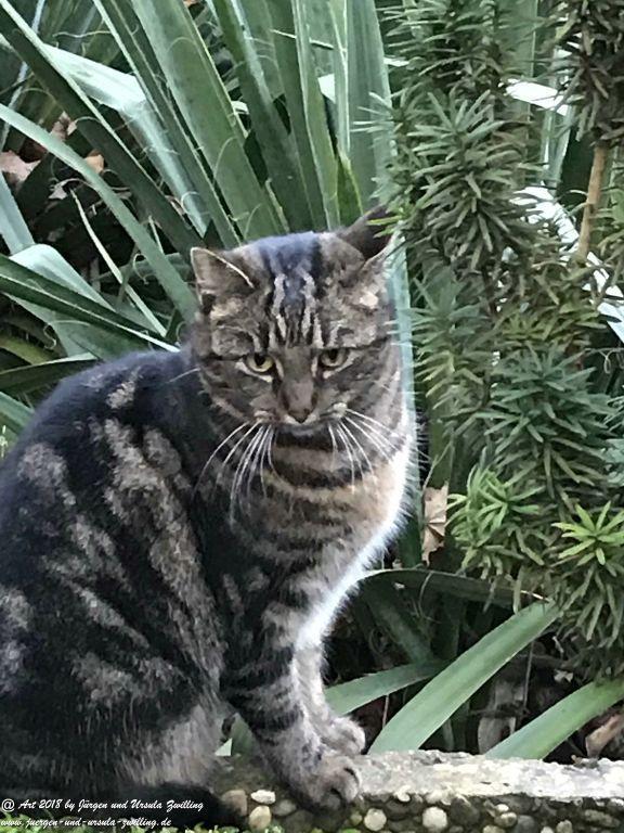 Katze Mimi im Januar 2018