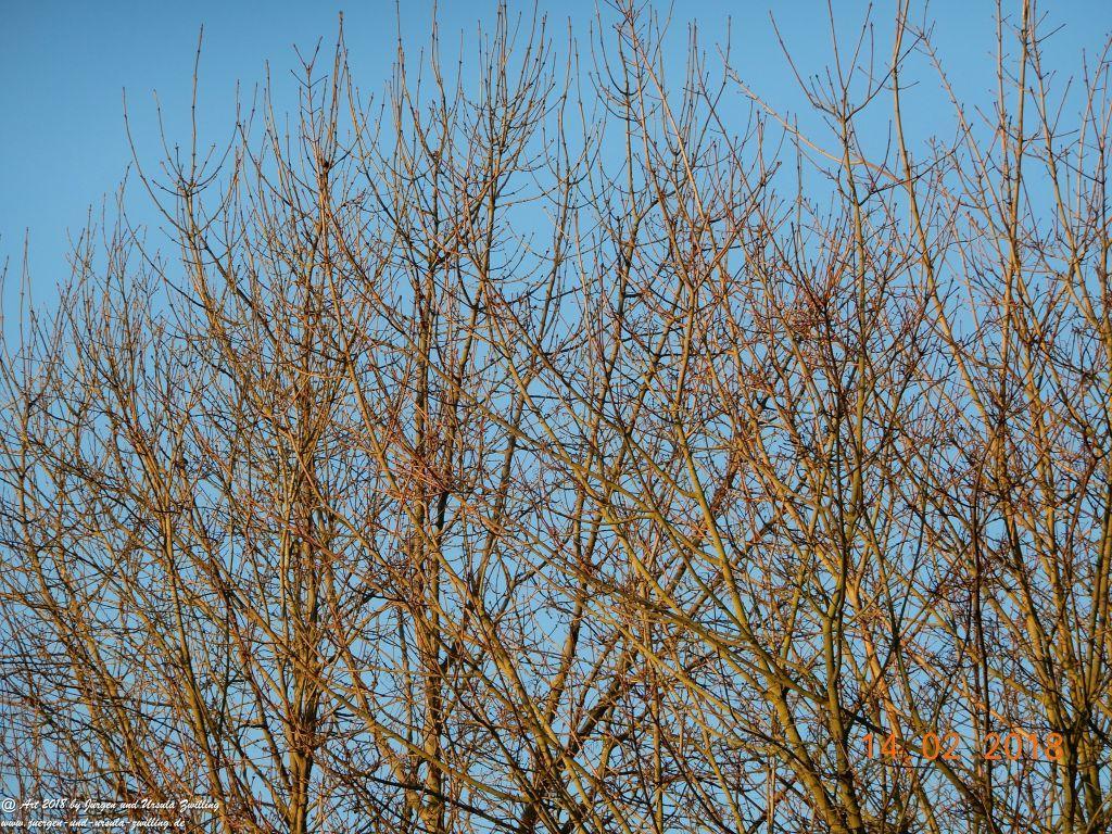 Frostiger Morgen am Valentinstag mit strahlend blauem Himmel
