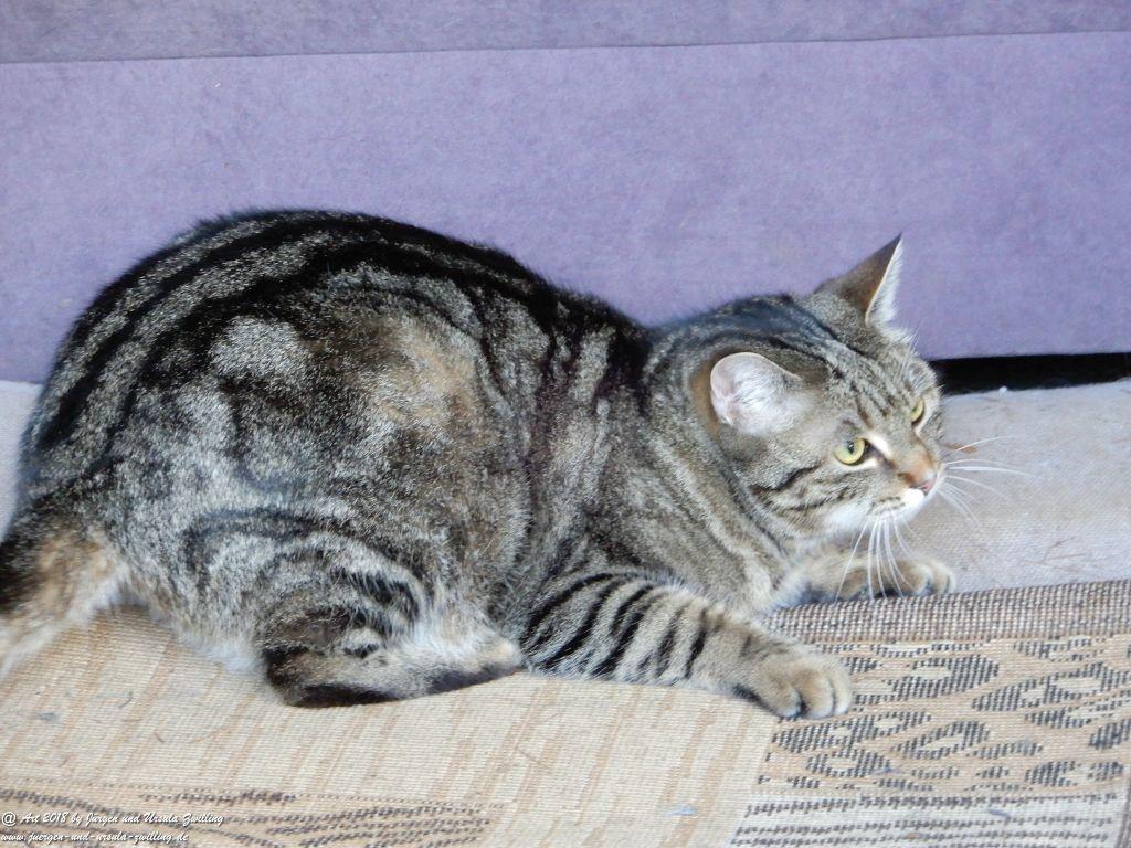 Katze Mimi im Februar 2018