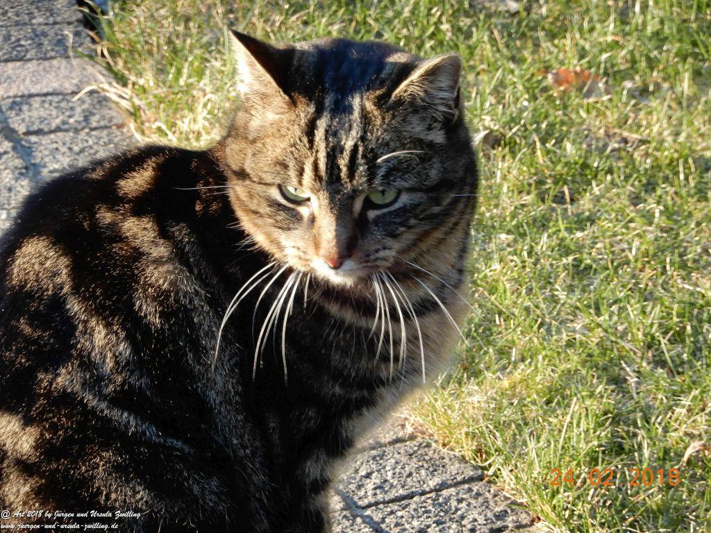 Katze Mimi im Sonnenschein