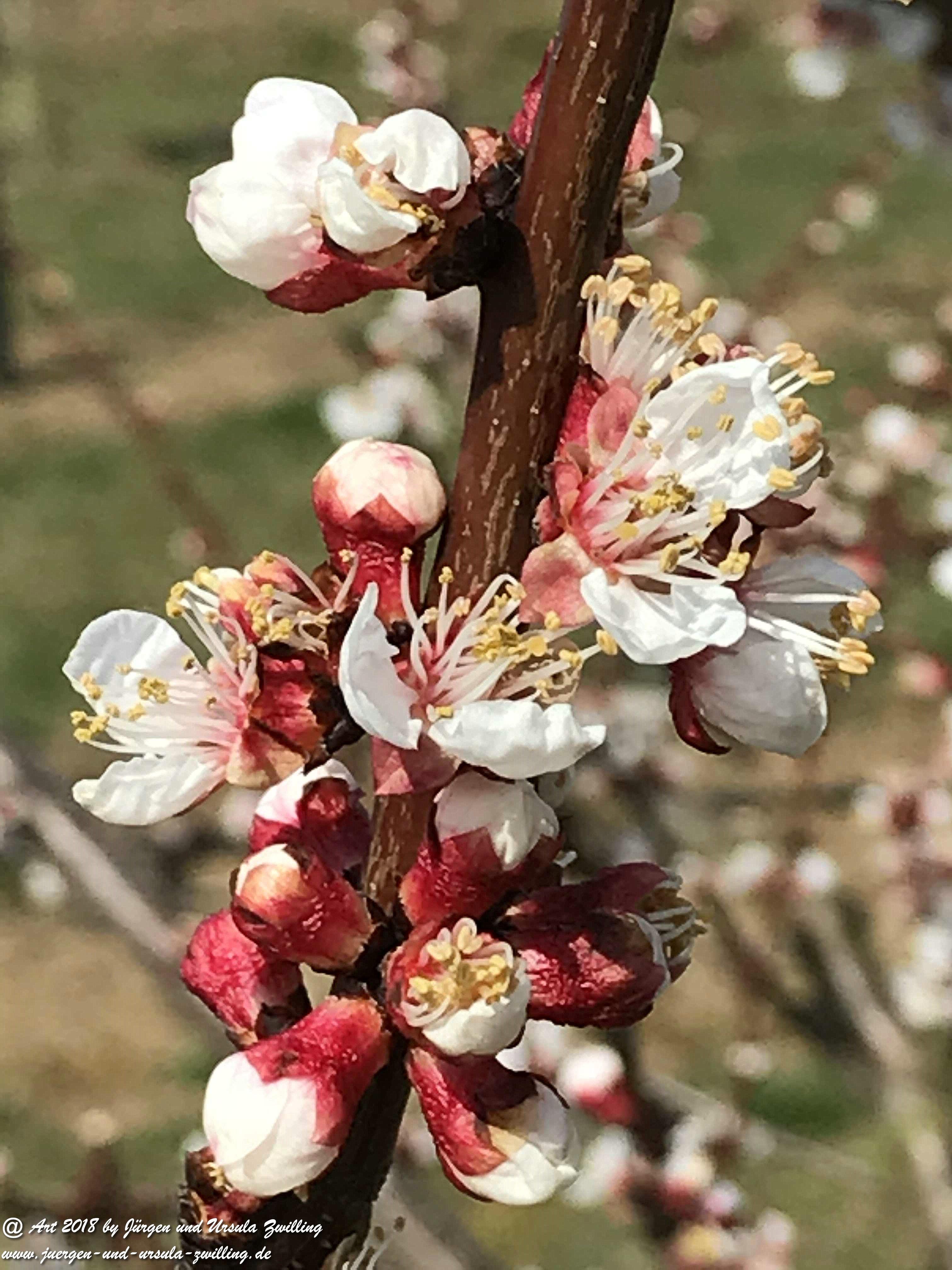 Frühlingsstart
