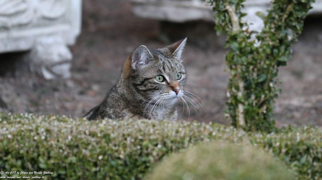 Katze Mimi im April 2018