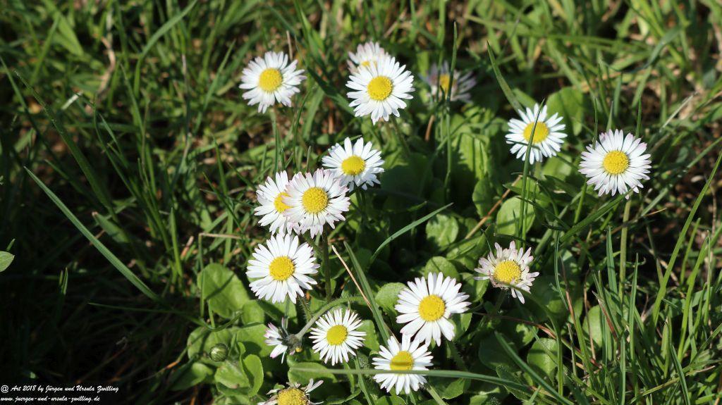 Blütenmeer in den Feldern von Mainz Finthen - Rheinhessen