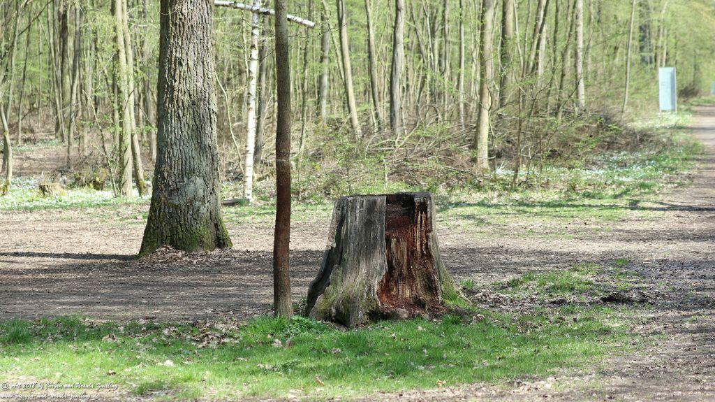 Frühlingserwachen im Ober Olmer Wald - Rheinhessen