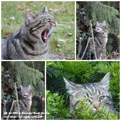 Katze Mimi (Fotoleinwand - Geschenk)