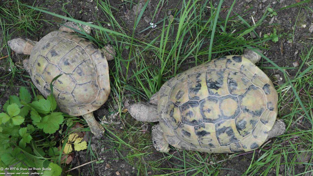Schildkröten Umzug ins Sommerquartier