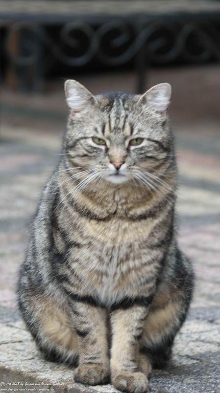 Katze Mimi im Mai 2018