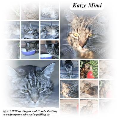 Katze Mimi im Juni 2018