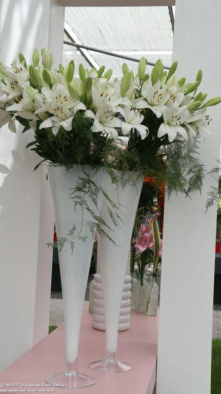 Lilien (Lilium) im Keukenhof in Lisse Niederlande - Nordsee