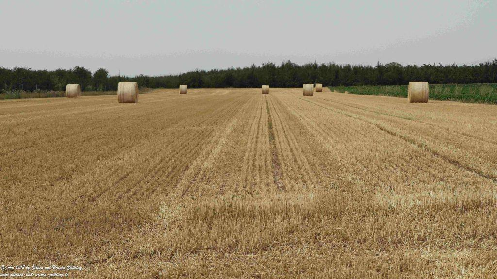 Felder nach der Ernte - Rheinhessen - Mainz
