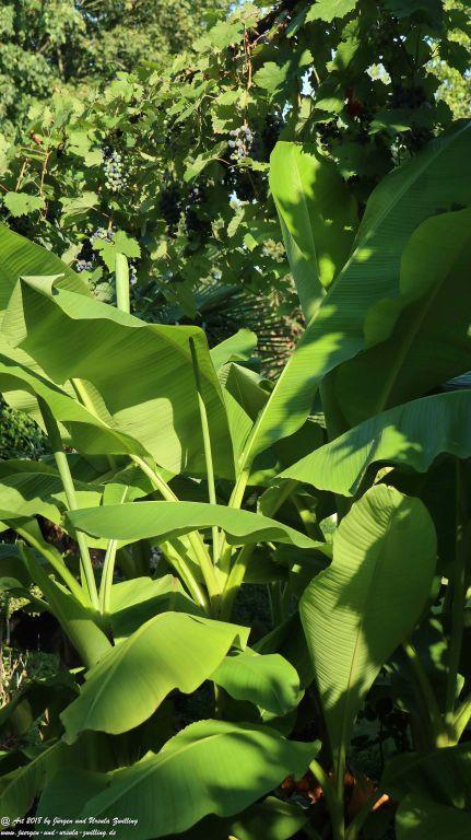 Banane trifft Traube