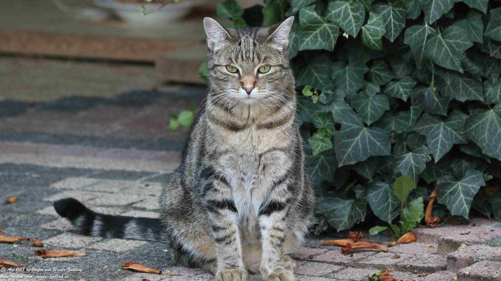 Katze Mimi im August 2018