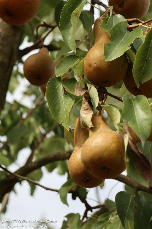 Äpfel und Birnen in Rheinhessen