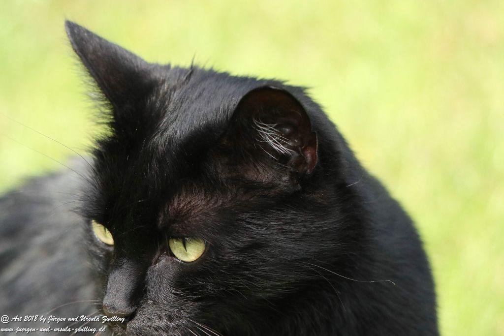 Katze Mimi im September 2018