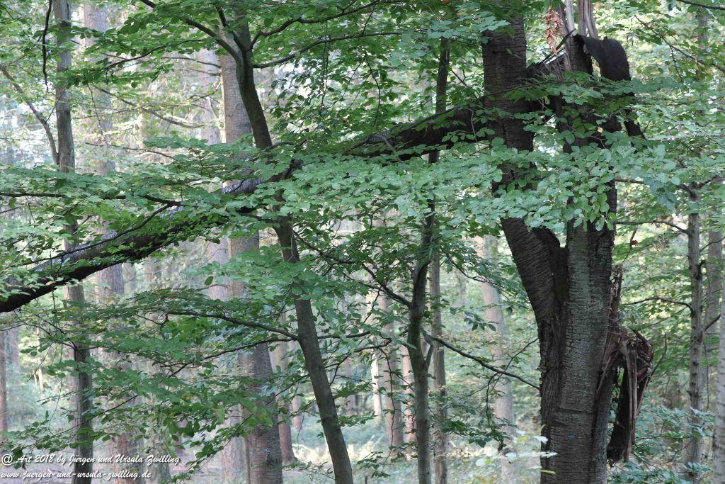 Herbst in Rheinhessen Ober Olmer Wald und Finther Felder
