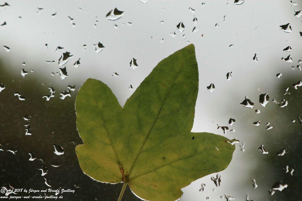 Sturm - Fenster - Blatt