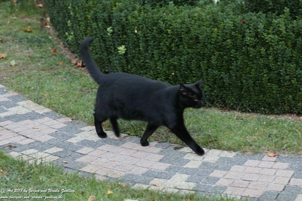 Katze Mimi im Oktober 2018