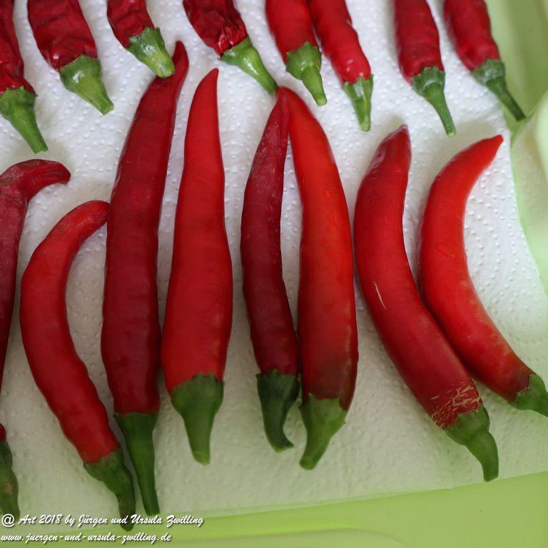 Erntezeit - Chili und Feigen