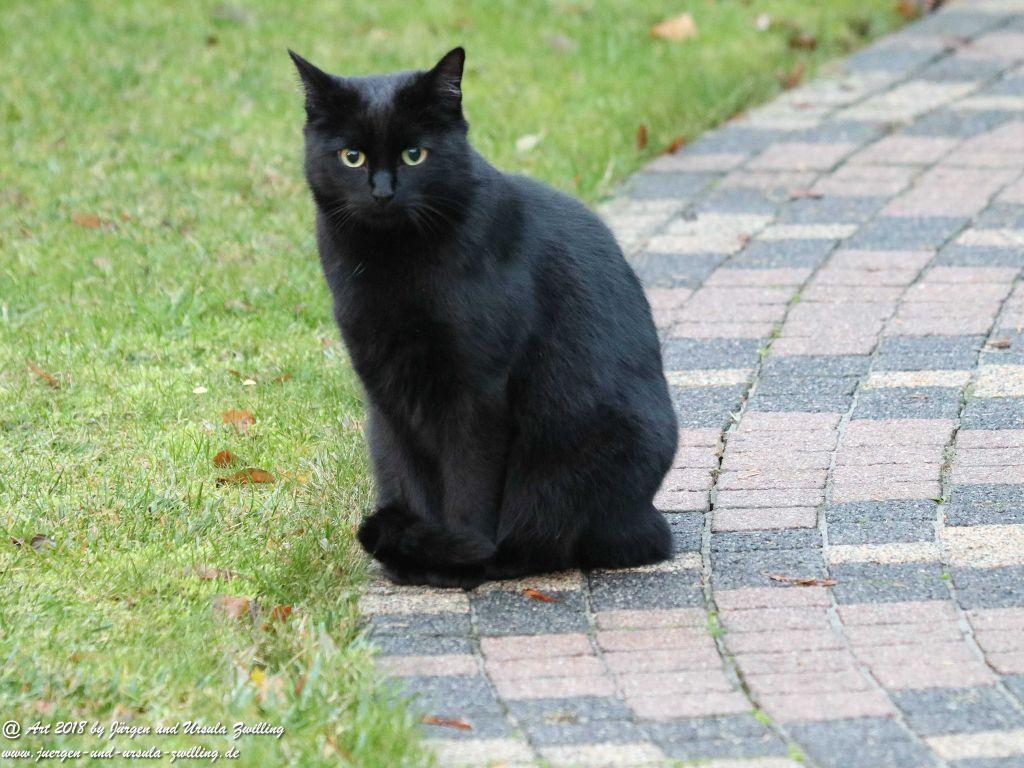 Katze Mimi im November 2018