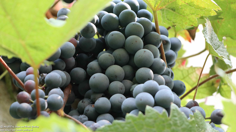Weintraube 2