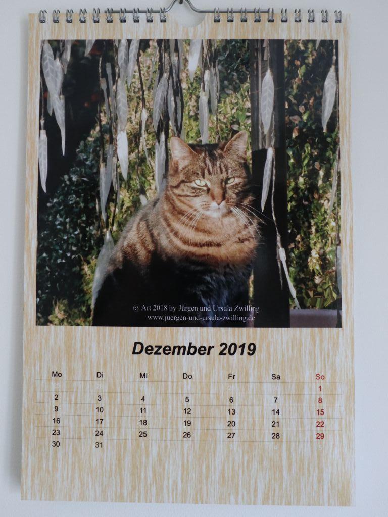 Galerie Kalender 2019 Katze Mimi
