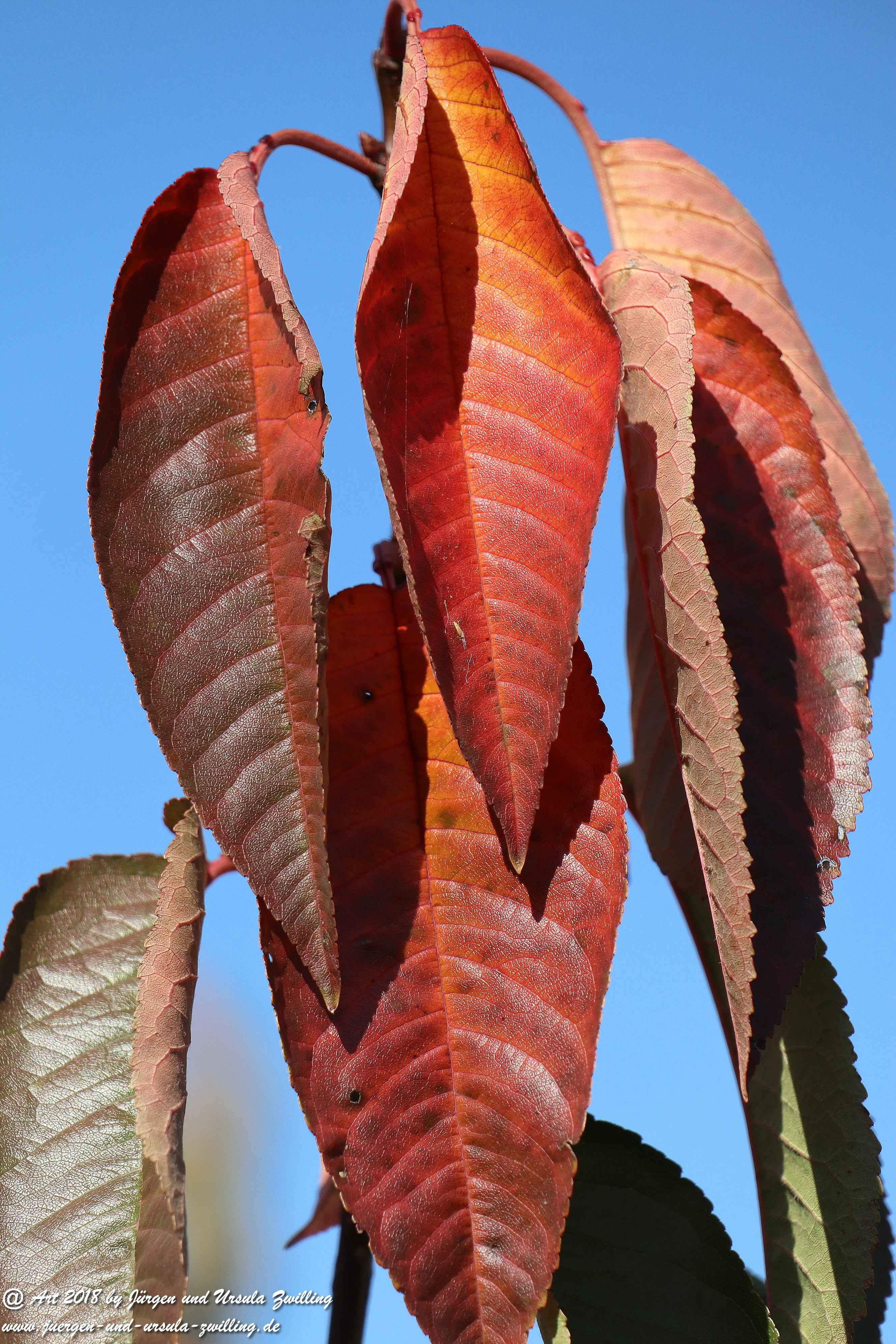 Herbstblatt 2