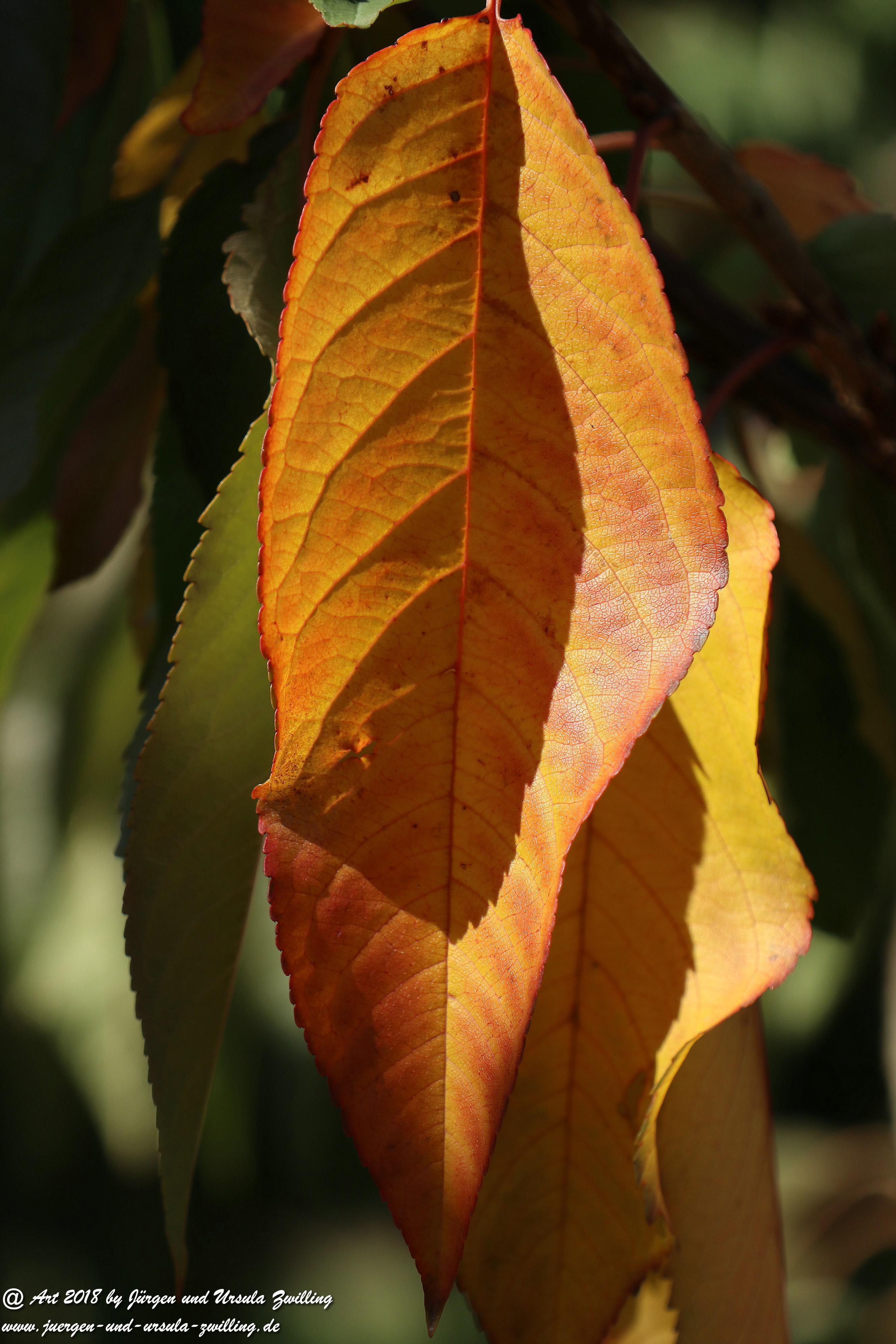 Herbstblatt 4