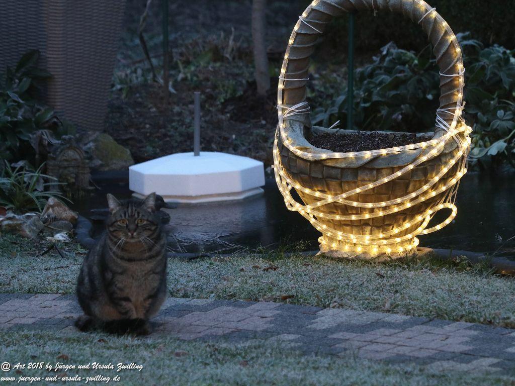 Katze Mimi im Dezember 2018