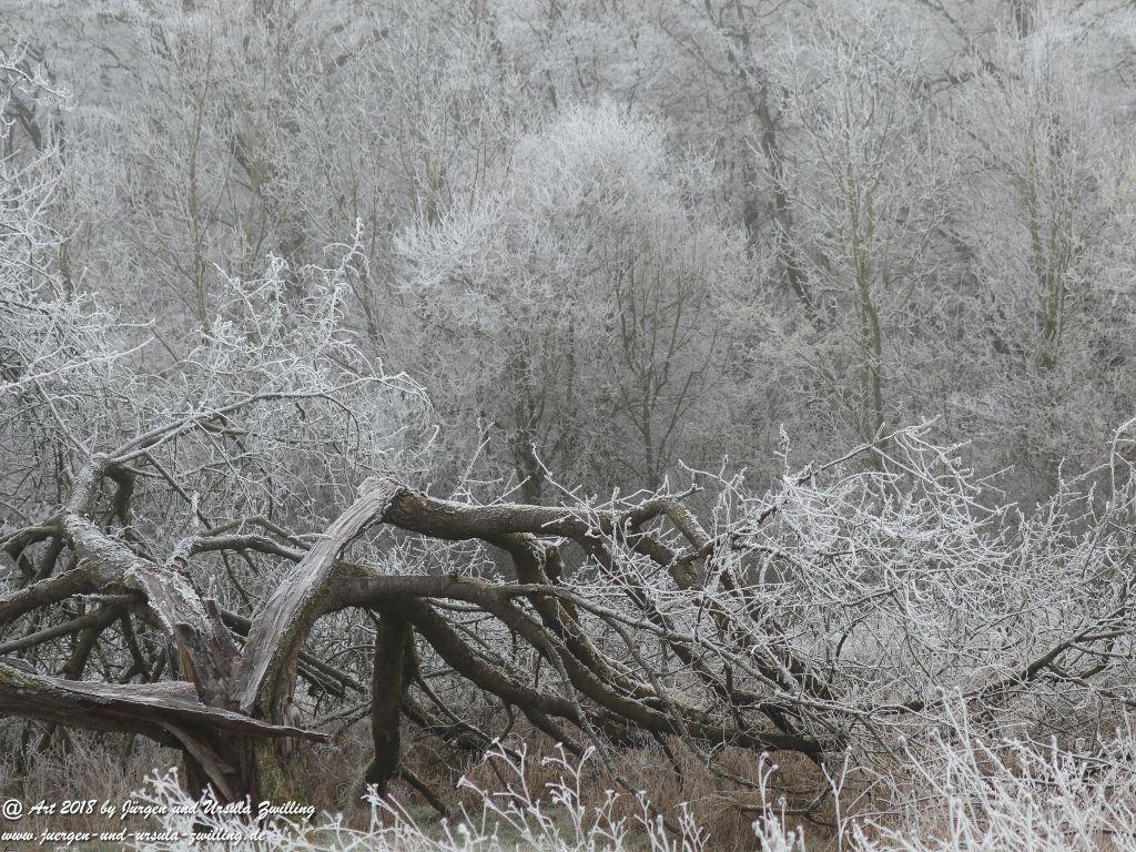 Rheinhessen frostig - Felder Mainz - Finthen - Ober Olmer Wald