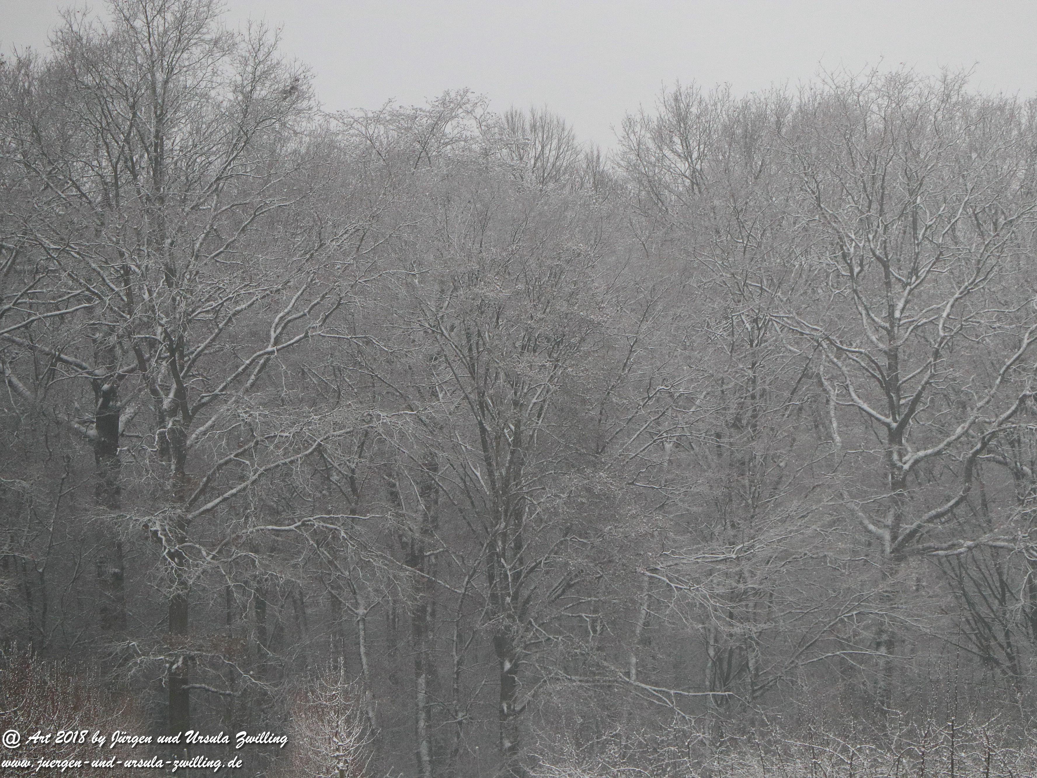 Schwarz - Weißer - Winter